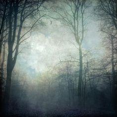 textured beech tree forest in fog by Dirk Wustenhagen.