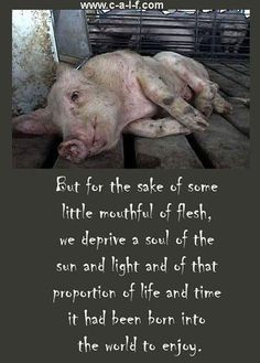 But for the sake of some little mouthful of flesh, we deprive a soul of the sun and light and of that proportion of life and time it had been born into the world to enjoy.
