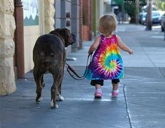 its amazing that big dog walks so nicely with her, what a great babysitter