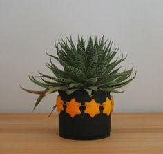 Duft-Sterne aus Orangenschalen / Scented stars made of orange peel