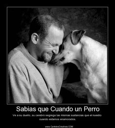 The one that makes me laugh My Best Friend, Best Friends, Education Canine, Milanesa, Animal Quotes, Basset Hound, Bull Terrier, Pugs, Dog Lovers