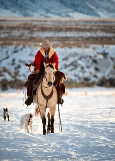 Beautful Buckskin colored horse, calving in winter time with his dog friends.