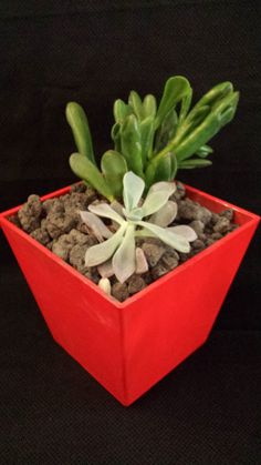 Living succulent garden in a red container by UrbanSucculent, $48.00