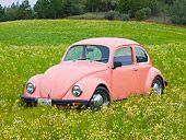 1968 Volkswagen Bug Pink - In Field Of Wildflowers