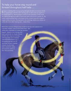 Quick Tip: Help Your Horse Stay Round and Forward Throughout Half Halts