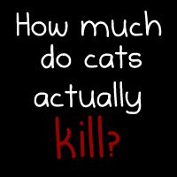 How much do cats actually kill? The Oatmeal-This cracks me up, but the statistics are true.  Hehe, still, cats are my favorite animals!