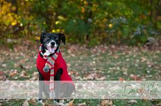 dog photo event christmas - Google Search