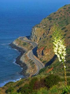 The PACIFIC COAST ....HIGHWAY 101