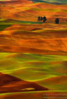 Golden rolling hills by Nitin Kansal, via 500px; Palouse Steptoe State Park, Washington