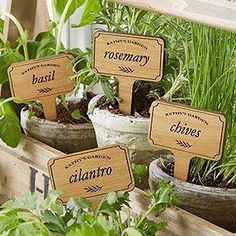 Herb Garden Personalized Plant Markers Buy custom plant markers & add your own text to be custom engraved on the wooden herb plant markers. Set of 4 plant markers - perfect for anyone who loves to garden! Organic Vegetables, Growing Vegetables, Hydroponic Gardening, Container Gardening, Indoor Gardening, Gardening Hacks, Hydroponics, Gardening Zones, Urban Gardening