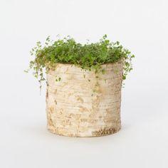 Terrain Birch Cylinder Pots #shopterrain