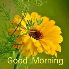 Good Morning Quotes, Wishes, Greetings, WhatsApp Messages, and Images Latest Good Morning, Good Morning Photos, Good Morning Friends, Good Morning Good Night, Morning Pictures, Good Morning Wishes, Greetings For The Day, Morning Greetings Quotes, Morning Messages