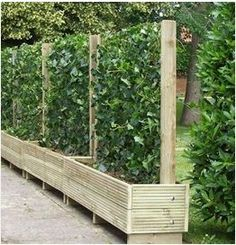 trellis planters make great barriers for privacy .