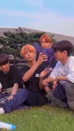 Stray Kids Chan, Stray Kids Seungmin, Felix Stray Kids, Funny Kpop Memes, Kid Memes, Savage Kids, Kpop Gifs, Chris Chan, Crazy Kids