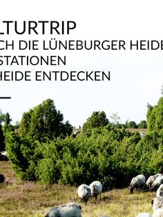 """#KultTrip Nr. 3: """"Kulturtrip durch die Lüneburger Heid"""" via @Wortdschungel. Eine richtige Kulturtour bietet uns Carola an mit vielen Veranstaltungstipps im Sommer in Celle, Hannover etc. - sehr fein! 19.7.16"""