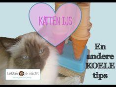 katten ijsjes en andere koele tips