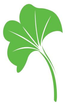 ginko leaves - Google Search