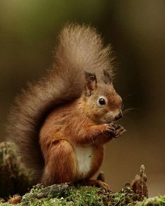 Squirrel Pictures, Cute Animal Pictures, Nature Animals, Animals And Pets, Cute Baby Animals, Funny Animals, Cute Squirrel, Squirrels, British Wildlife