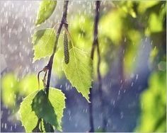 22 Best Beautiful Rain Wallpaper Images On Pinterest Rain
