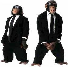 Humour Photos fun Singe in black Funny Laugh, Haha Funny, Stupid Memes, Funny Memes, Funny Animals, Cute Animals, Monkey Pictures, The Blues Brothers, Mood Pics