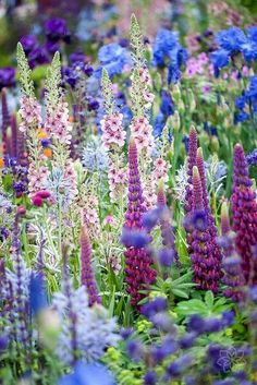 55 Fresh and Beautiful Spring Flowers Garden Ideas - Fotos - Blumen & Pflanzen Flower Garden Design, Garden Cottage, Planting Flowers, Flowers Garden, Garden Plants, Herb Garden, Lupine Flowers, Garden Fun, Iris Flowers