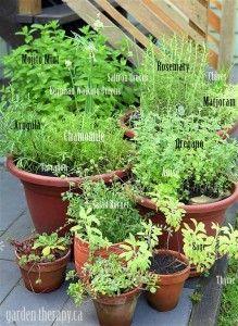 Container Herb Garden - growing perennial herbs (via www.GardenTherapy.ca)