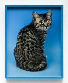 Elad Lassery Crazy Cat Lady, Crazy Cats, Annie Leibovitz, World Of Color, Deco, Cat Art, Creatures, Sculpture, Spy