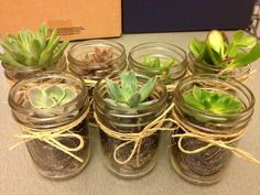 Succulents in terrariums for holiday presents to friends.