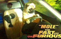 Mis perros tienen la mania de conducir