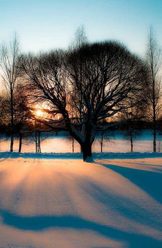 Sunset Tree, Sweden, by Darren Packman, on flickr.
