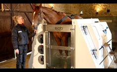 ECB ~ Equine Spa The science behind cold salt hydrotherapy - how it works and what it treats