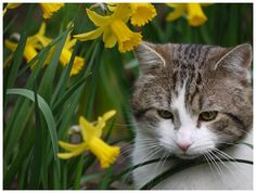 Larry the cat in the Downing Street garden looking adorable!