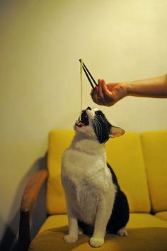 "catsandtheirhumans: "" (via ore menkui   Flickr - Photo Sharing!) """
