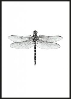 Dragonfly (21x30cm) - Illustrationer - TAVLOR & POSTERS