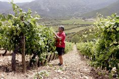 Antoine Arena is a godfather of Corsican wine. Along with a few other influential pioneers, like Christian Imbert of Domaine de Torraccia and Jean-Charles Abbatucci of Domaine Comte Abbatucci, Mr. Arena has helped make Corsica one of the most exciting and distinctive wine regions in the world. (Photo: Marie Arena)