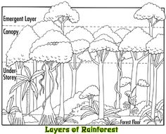 layers of the rainforest | animals plants in the rainforest 5 4 facts about the rainforest 6 ...