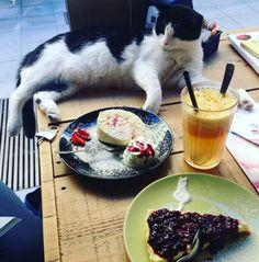 MiaGola Caffè, a Torino il primo bar-cafè dove prendere un aperitivo in compagnia di simpatici gatti in cerca di coccole