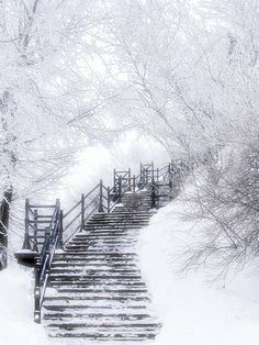 Mount-Royal. Montreal, Quebec, Canada - Photographed by Gatan Bourque http://awesome-canada.com/ #winter #Canada #nature