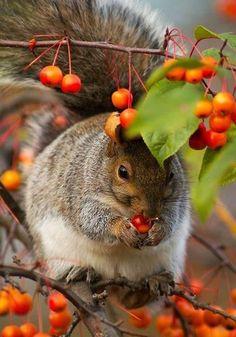 Herbst Landschaften und Tiere