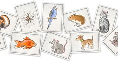 flashcards | pets