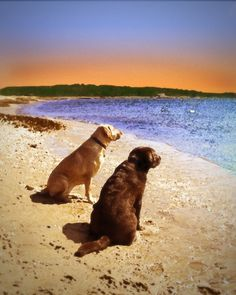 Labradors Watching the Sunset #photography #etsy #pets #labrador #retriever #home #decor #homedecor