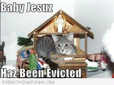 funny cat sleeps in manger Baby Jesus has been evicted