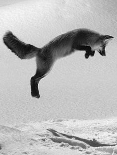 Hop - http://www.facebook.com/pages/Pour-la-protection-des-animaux-et-de-la-nature/120423378016370