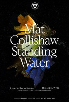 Major new personal exhibition Standing Water by Mat Collishaw opens at Galerie Rudolfinum, Prague on April 11th.  11 April – 8 July 2018  Image: Mat Collishaw, Insecticide 15 (detail), 2009. Courtesy the artist and Blain Southern.