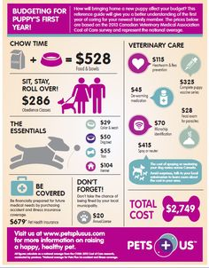 Considering a puppy? Are you ready?: Budgeting for a puppy's first year #infographic #JoshuaPick