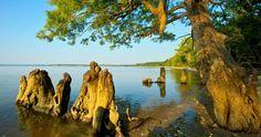 Chippokes Plantation State Park (Surry, VA)