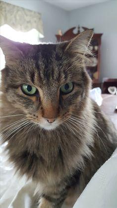 #cat #catsitting #whenurnottherepetcare #sussexcountynj
