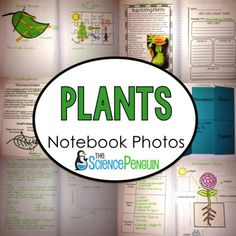 Teaching plants and photosynthesis to your students? Try these fun ideas for science notebooks. Plant Lessons, Science Lessons, Teaching Science, Life Science, Science Ideas, Science Activities, Teaching Ideas, Biology Interactive Notebook, Science Notebooks