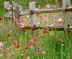 """de wandelroute """"de graancirkel"""" in Oploo, hier zijn prachtige veldboeketten te zien."""