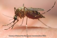 There are over 170 different mosquito species found in North America. Some are carriers of serious diseases such as West Nile virus, EEE, and yellow fever.
